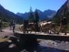 Brücke mit Kühen über den Höhenbach